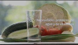 CONSULTA LAS ASIGNATURAS QUE APRENDERÁS Y LAS SALIDAS LABORALES QUE PROMETE EL GRADUARSE DEL CURSO DE NUTRICIÓN Y ALIMENTACIÓN SALUDABLE