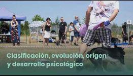 TEMARIO Y SALIDAS PROFESIONALES DEL CURSO A DISTANCIA ADIESTRAMIENTO CANINO OBEDIENCIA BÁSICA: VÍDEO EXPLICATIVO