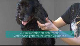 LO QUE COMENTAN LOS TITULADOS SOBRE FORMARSE A DISTANCIA COMO AUXILIAR VETERINARIO DE ANIMALES EXÓTICOS
