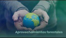 TEMARIO Y SALIDAS PROFESIONALES EN LA FP DE GRADO MEDIO DE TRABAJOS FORESTALES Y DE CONSERVACIÓN DEL MEDIO NATURAL: VÍDEO INFORMATIVO